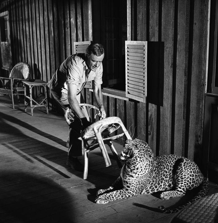 Kennt keine Furcht vor wilden Tieren: Dr. Marsh Tracy (Marshall Thompson) ... - Bildquelle: 2007 Warner Brothers
