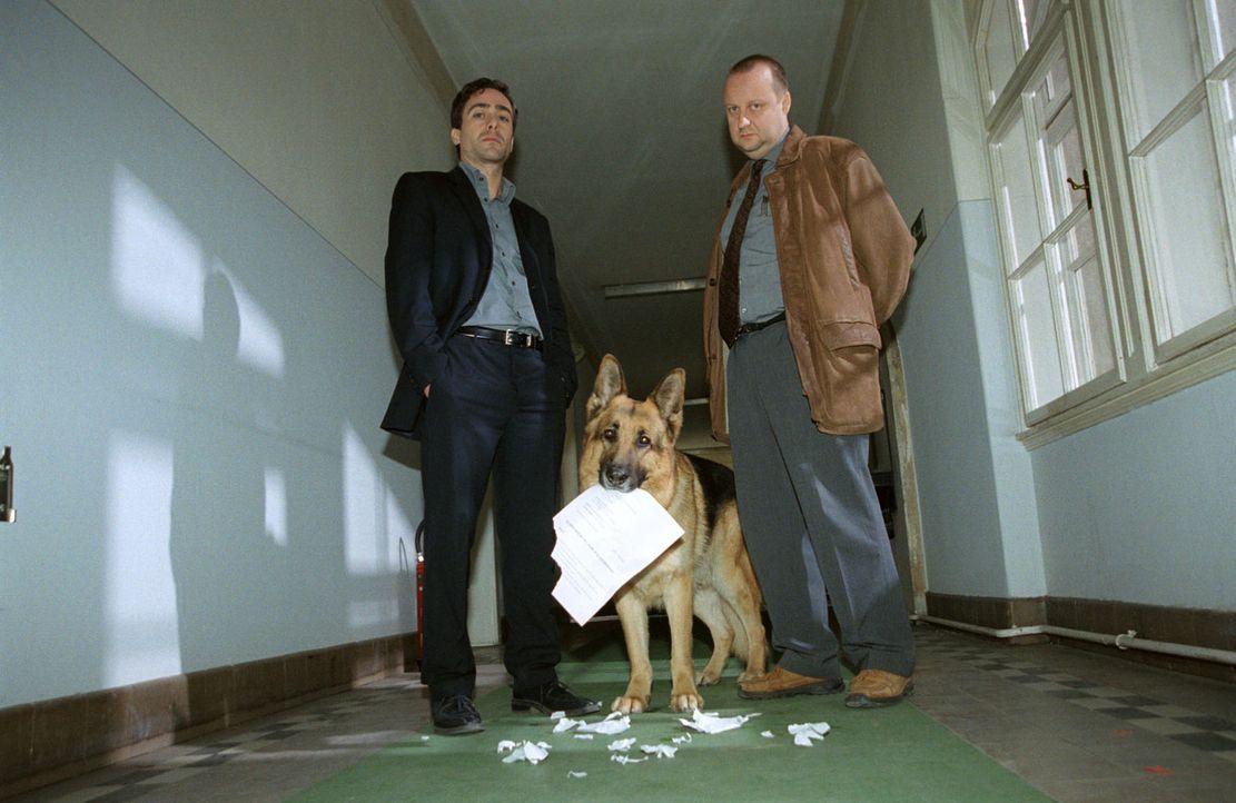 Rex zerreißt vor den Augen seiner Kollegen Hoffmann (Alexander Pschill, l.) und Kunz (Martin Weinek, r.) seinen Suspendierungsbescheid. - Bildquelle: Ali Schafler Sat.1