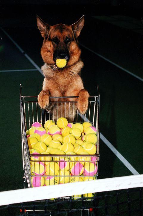 """Rex gibt den """"Balljungen""""... - Bildquelle: Ali Schafler Sat.1"""
