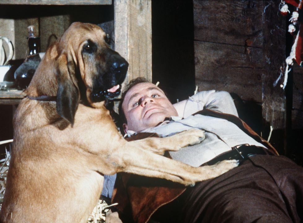 Hoss (Dan Blocker) hat einen neuen Freund ... - Bildquelle: Paramount Pictures