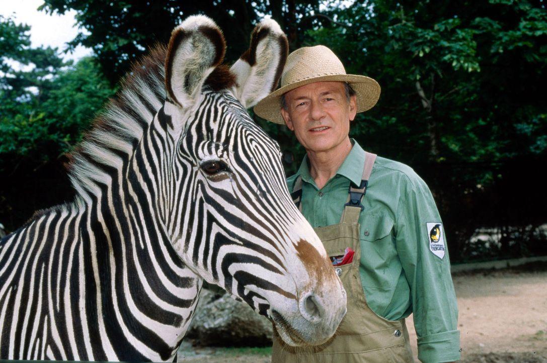 Der Mann mit den 1000 Gesichtern (Joachim Bissmeier) hat sich in den Wiener Zoo geflüchtet ... - Bildquelle: Ali Schafler Sat.1
