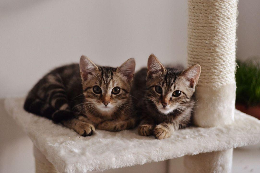 Fin und Leo als Kätzchen