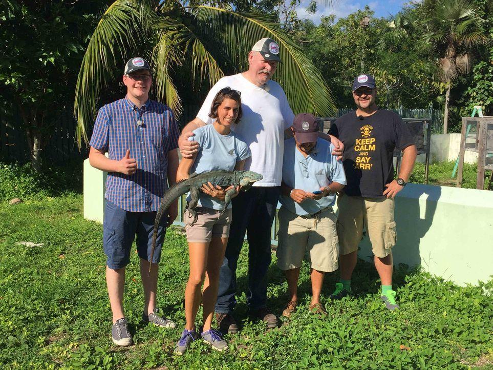 Auf den Cayman Islands treffen Tamme Hanken (M.) und sein Lehrling Anton (l.) in einer Auffangstation für bedrohte Tierarten auf die Ur-Einwohner de... - Bildquelle: kabel eins