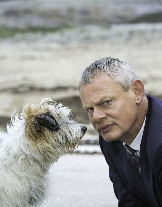 (7. Staffel) - Ein Straßenhund folgt Doc Martin (Martin Clunes) auf Schritt und Tritt ... - Bildquelle: Neil Genower IN LETZTER MINUTE