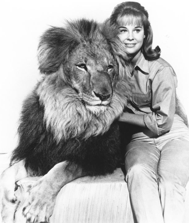 Häufig wollen die Schimpansin Judy und der schielende Löwe Clarence Paula (Cheryl Miller) und dem Team helfen, lösen dabei aber gerne ein wildes Cha... - Bildquelle: 2007 Warner Bros. All Rights Reserved.