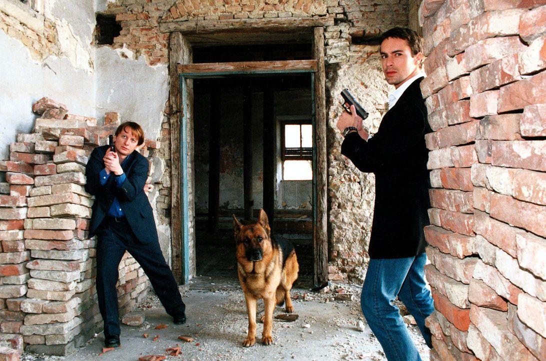 Kommissar Brandtner (Gedeon Burkhard, r.) und Böck (Heinz Weixelbraun, l.) verfolgen zusammen mit Rex eine heiße Spur. - Bildquelle: Ali Schafler Sat.1