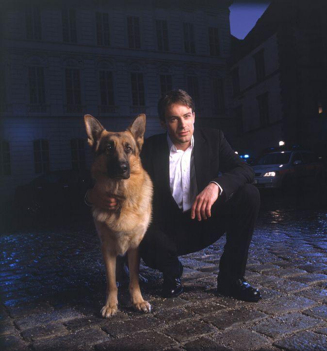 (5. & 6. Staffel) - Immer im Einsatz: Kommissar Rex und Kommissar Brandtner (Gedeon Burkhard) ... - Bildquelle: Rössle Sat.1