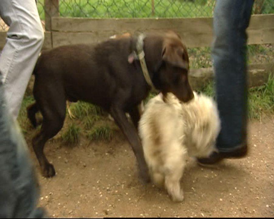 Stefanie ist Hundetherapeutin und hilft verzweifelten Hundebesitzern in ihrer häuslichen Umgebung. Ohne Gewalt und Sprache therapiert sie auch die a... - Bildquelle: SAT.1 Gold