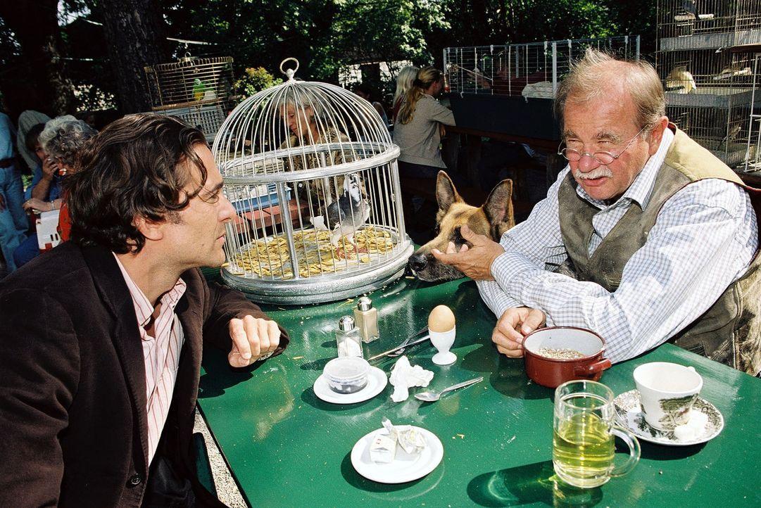 Im Zuge der Ermittlungen im Taubenzüchtermilieu erfährt Marc (Alexander Pschill, l.) von Anton Pischinger (Ernst Konarek, r.), dass einige Jungtaube... - Bildquelle: Ali Schafler Sat.1