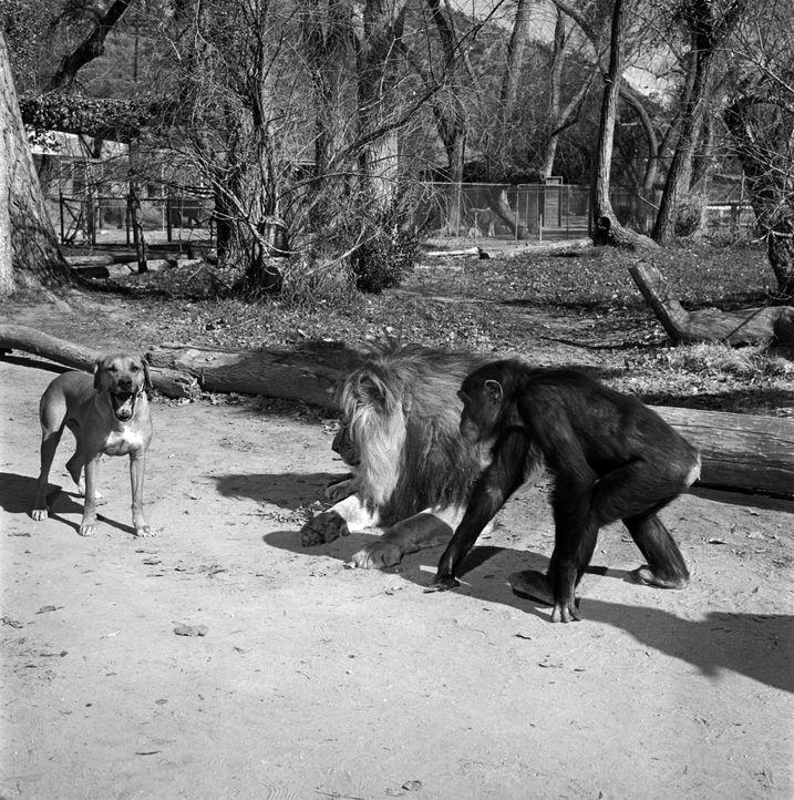 Die Tiere haben viel Spaß auf der Wameru-Tierstation im Osten Afrikas ... - Bildquelle: 2007 Warner Brothers
