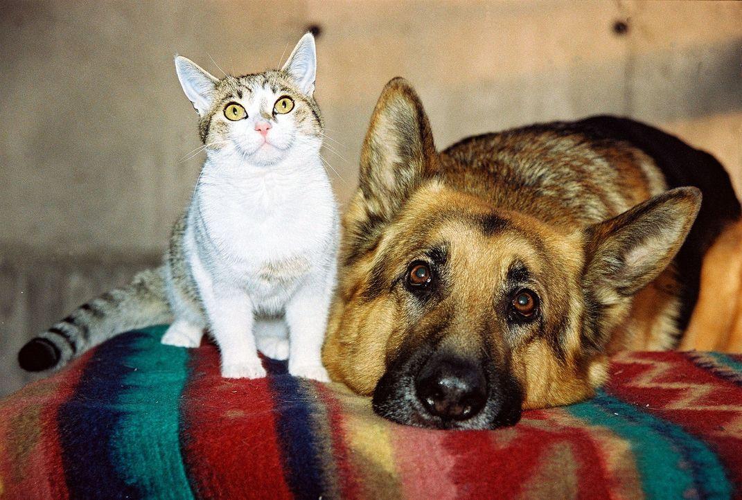 Rex und die Katze von Anneliese Kerling schließen Freundschaft ... - Bildquelle: Ali Schafler Sat.1