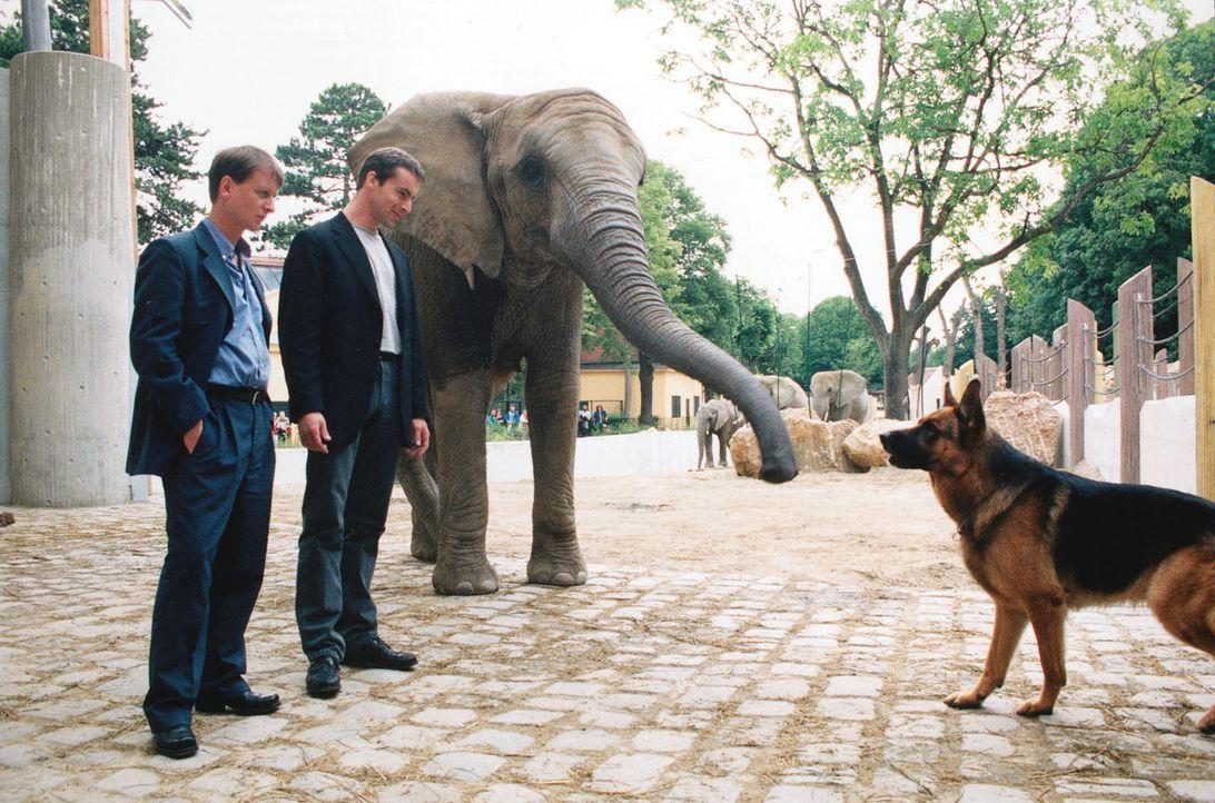 Kommissar Brandtner (Gedeon Burkhard, M.) und Böck (Heinz Weixelbraun, l.) fordern Rex auf, im Zoo die Spur des Verwandlungskünstlers zu verfolgen. - Bildquelle: Ali Schafler Sat.1