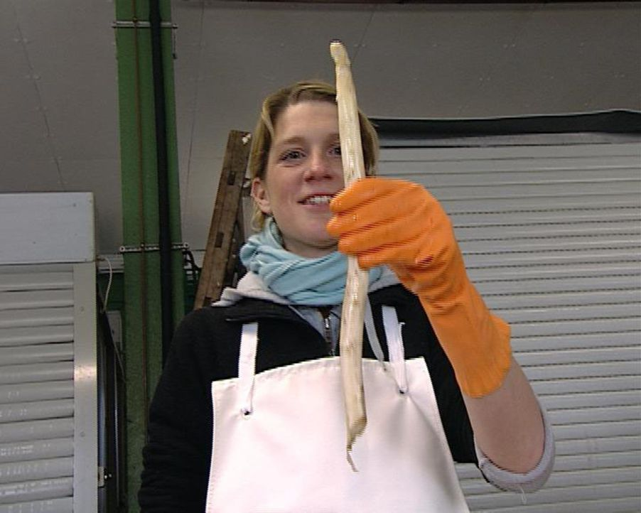 Spargel ist des Deutschen liebstes Saison-Gemüse. Nur will keiner die edlen Stangen stechen, denn die Spargelbauern setzen auf Handarbeit und haben... - Bildquelle: Sat.1