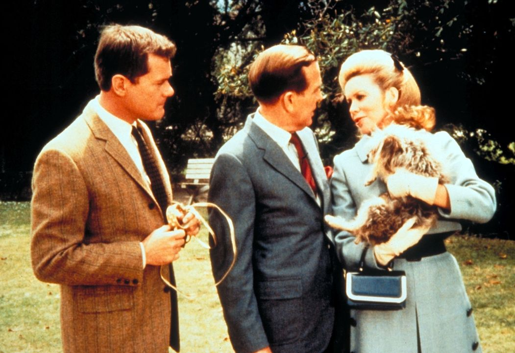 Amanda (Emmaline Henry, r.) teilt ihrem Mann Dr. Bellows (Hayden Rorke, M.) mit, dass sie den kleinen Hund behalten möchte. Tony (Larry Hagman, l.)... - Bildquelle: Columbia Pictures