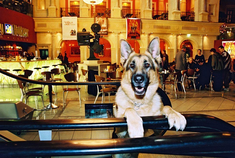 Rex ist dieses Mal im Kinocenter im Dienst. Ein Platzanweiser wurde erschlagen aufgefunden. Findet Rex Spuren des Täters? - Bildquelle: Ali Schafler Sat.1