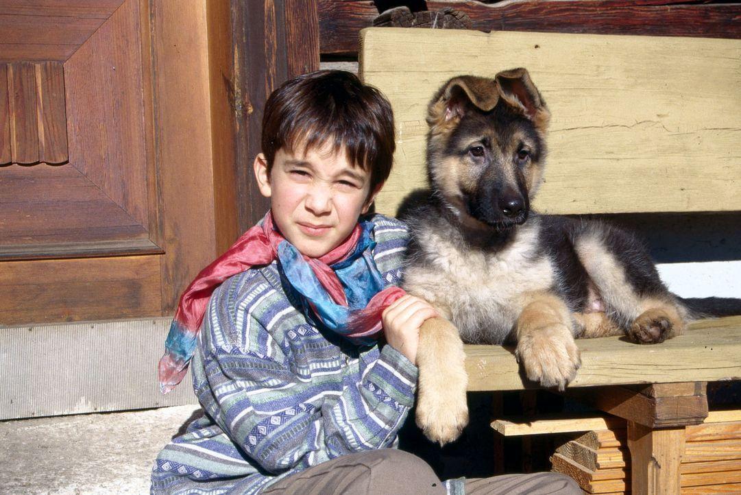 Benny Nachmann (Raphael Ghobadloo) ist heilfroh, dass die Züchterfamilie Antonius entschieden hat, den kleinen Rex bei ihm zu lassen. - Bildquelle: Ali Schafler SAT.1