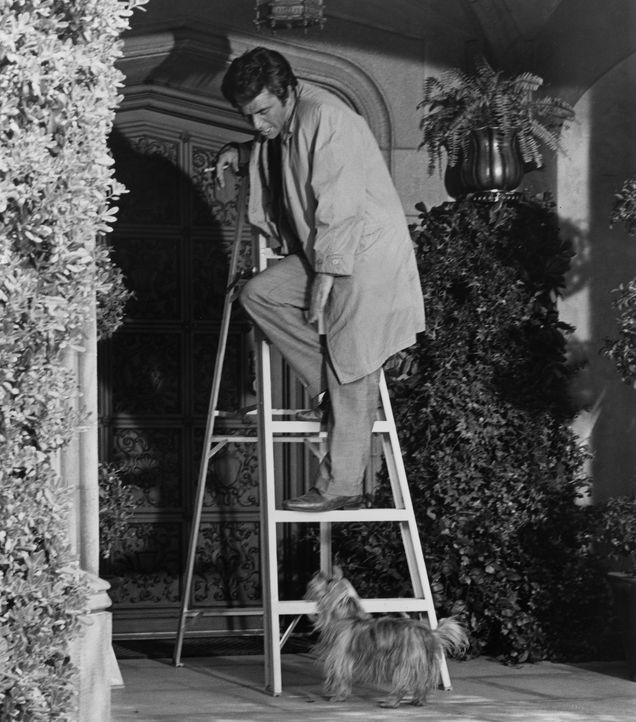 Columbo (Peter Falk) - Bildquelle: 1971 Universal City Studios LLLP. All Rights Reserved.