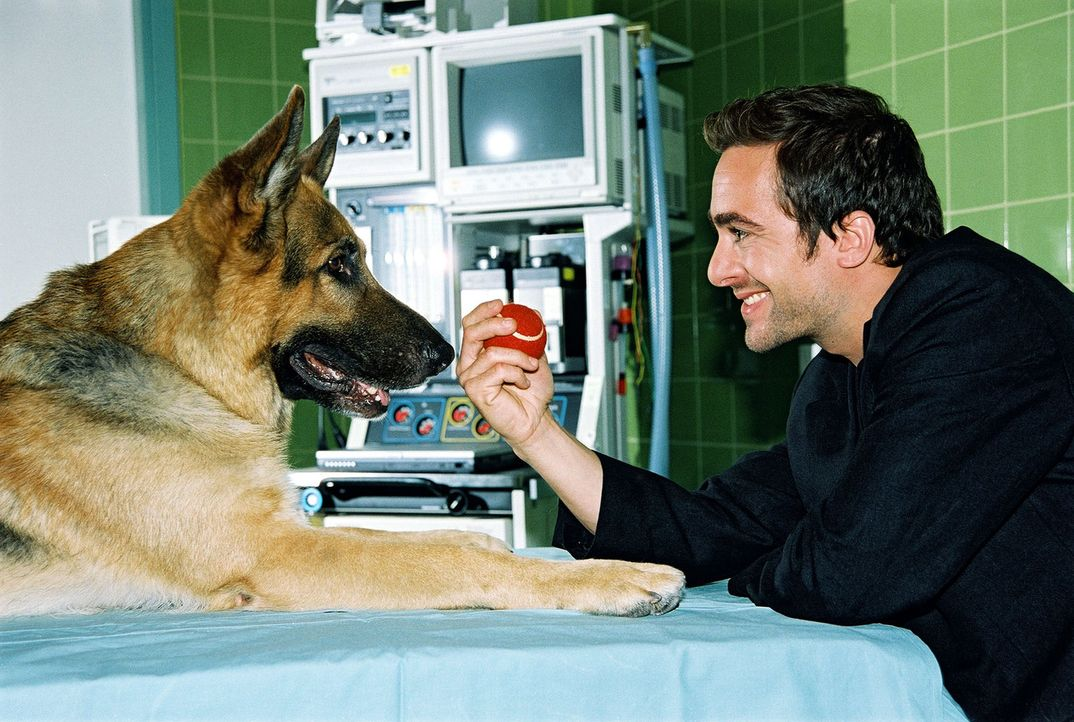 (8. Staffel) - Rex hat die Erpresser gestellt. Zur Belohnung gibts von Marc (Alexander Pschill) einen tiefroten Apfel ... - Bildquelle: Ali Schafler Sat.1
