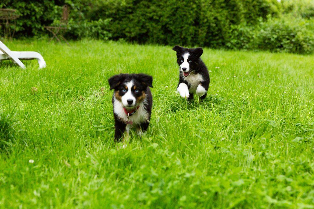Die Welpen der Familie Moura genießen die Zeit im Hundehotel ... - Bildquelle: SAT.1
