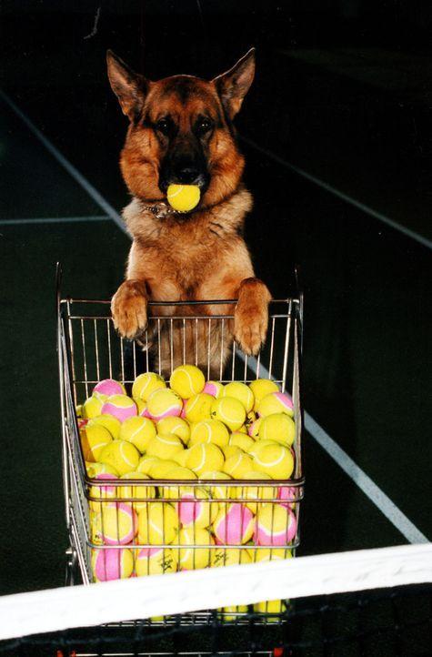 Rex - immer am Ball ... - Bildquelle: Ali Schafler Sat.1