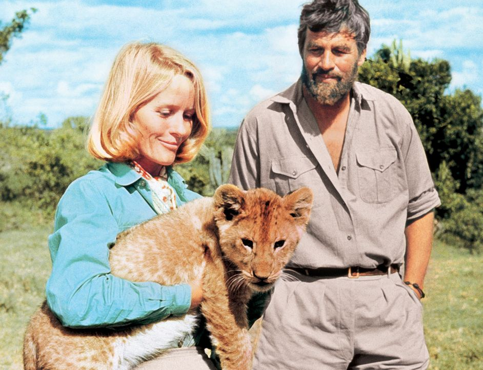 Zusammen mit ihrem Mann George (Bill Travers, r.) zieht Joy (Virginia McKenna, l.) drei Löwenbabies mit der Flasche auf. Zu dem jüngsten, der Löwin... - Bildquelle: 1965, renewed 1993 Columbia Pictures Industries, Inc. All Rights Reserved.