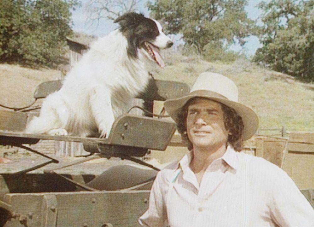 """Ein streunender Hund hat sich Charles (Michael Landon) angeschlossen. Wegen seiner sonderbaren Musterung nennen ihn die Ingalls """"Bandit"""". - Bildquelle: Worldvision"""