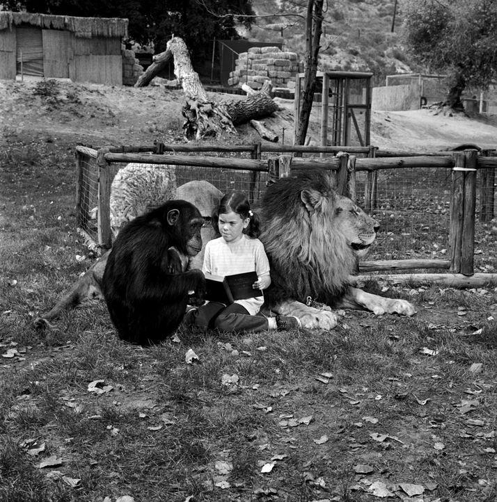 Schimpansin Judy und der schielende Löwe Clarence sind perfekte Babysitter ... - Bildquelle: 2007 Warner Brothers