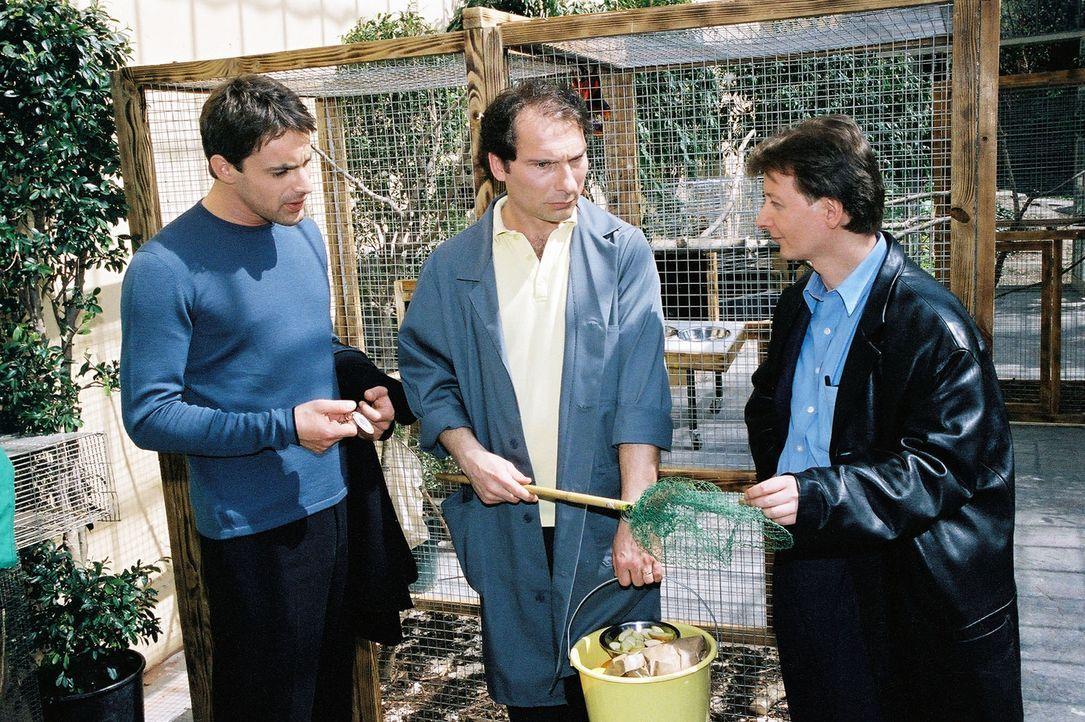Kommissar Brandtner (Gedeon Burkhard, l.) und Christian Böck (Heinz Weixelbraun, r.) erkundigen sich bei einem Vogelhändler (Franz Solar, M.) nach d... - Bildquelle: Ali Schafler Sat.1