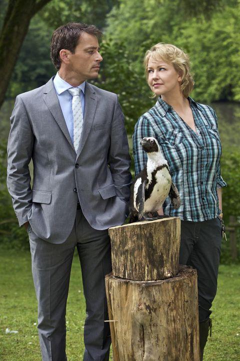 """Sonja Winter (Floriane Daniel, r.) kämpft um die Erhaltung ihres Zoos und den Verbleib von Pinguin """"Schulze"""". Dabei muss sie sich mit dem charmanten... - Bildquelle: Guido Engels Sat.1"""