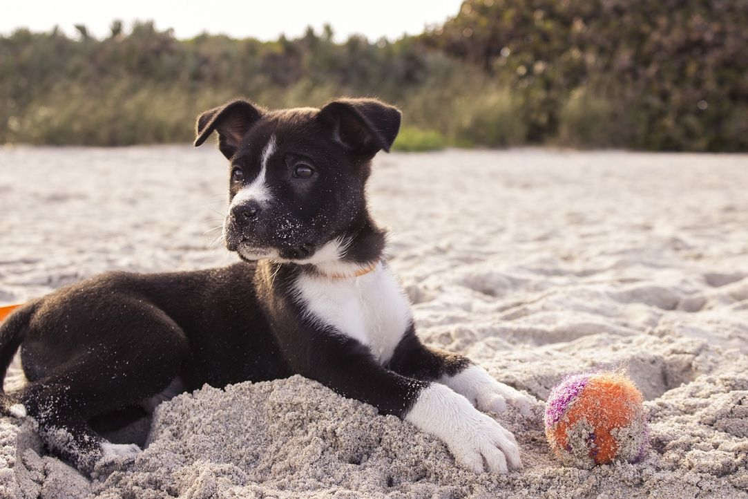 dog-690143_1280 - Bildquelle: Pixabay