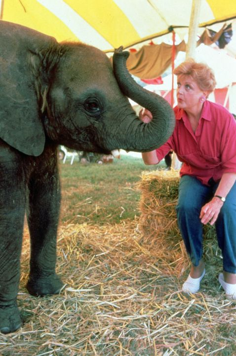 In einem Zirkus geschehen seltsame Unglücksfälle. Jessica Fletcher (Angela Lansbury) macht sich auf die Suche nach den Ursachen ... - Bildquelle: Universal Pictures