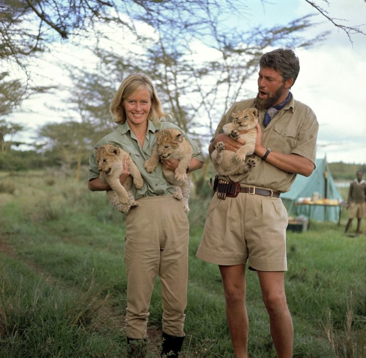 Wildhüter George Adamson (Bill Travers, r.) zieht zusammen mit seiner Frau Joy (Virginia McKenna, l.) drei Löwenbabys mit der Flasche groß, doch bal... - Bildquelle: 1965, renewed 1993 Columbia Pictures Industries, Inc. All Rights Reserved.