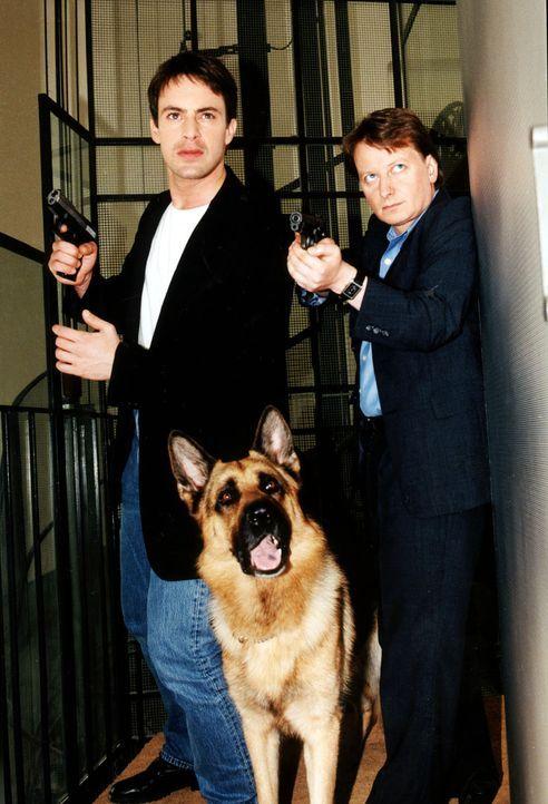 Kommissar Brandtner (Gedeon Burkhard, l.) und Kommissar Böck (Heinz Weixelbraun, r.) verfolgen zusammen mit Rex einen Verdächtigen. - Bildquelle: Ali Schafler Sat.1
