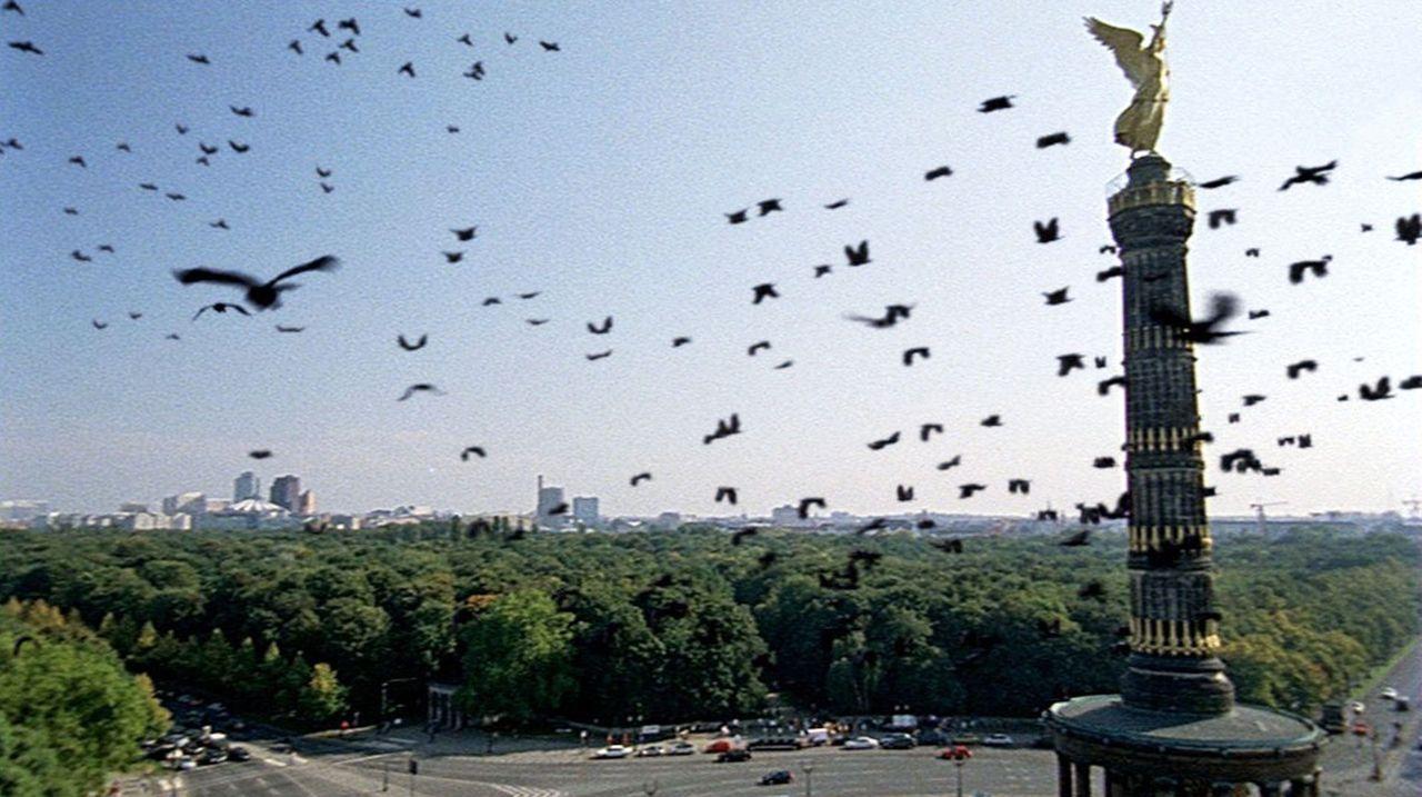 Die Krähen werden zu einer ernsthaften Bedrohung ... - Bildquelle: TVT Sat.1