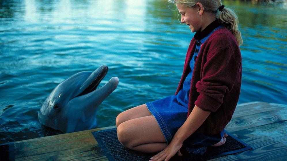 Das Delphinwunder
