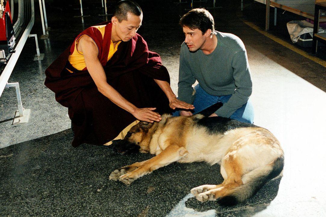 Als Kommissar Brandtner (Gedeon Burkhard, r.) dem geheimnisumwitterten Rezept auf die Spur kommt, gerät Rex in Lebensgefahr. Der tibetische Mönch (N... - Bildquelle: Ali Schafler Sat.1
