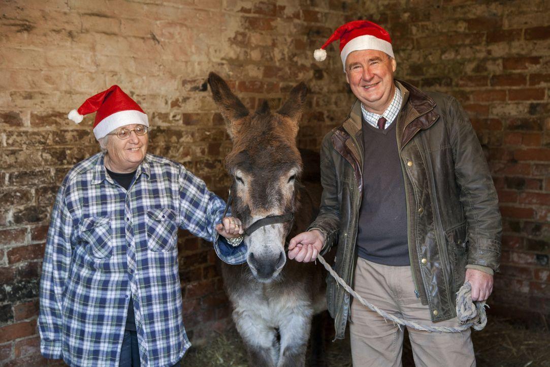 In Thirsk steht Weihnachten vor der Tür und Julian und Peter werden gefragt,... - Bildquelle: Daisybeck Studios