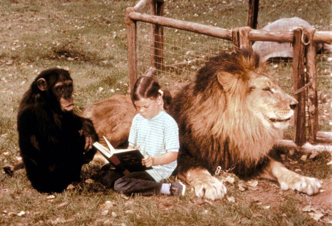 Auch als Babysitter sind Judy, das Schimpansenweibchen, und Clarence, der Löwen einzusetzen ... - Bildquelle: CBS Television