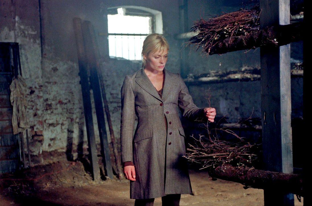 Alex (Susanna Simon) entdeckt in einer Scheune verdächtig viele Nester ... - Bildquelle: Noreen Flynn Sat.1