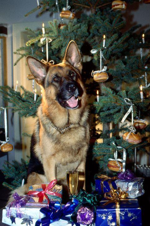 Ein Weihnachtsbaum voller Semmeln. Das ist doch endlich mal ein Weihnachten nach Rex' Geschmack. Da ist auch er bereit, sich den Festivitäten seiner... - Bildquelle: Ali Schafler Sat.1