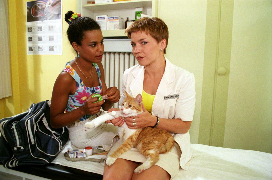 Maria (Adisat Semenitsch, l.) und Stephanie (Claudia Schmutzler, r.) kümmern sich liebevoll um den vierbeinigen Patienten. - Bildquelle: Noreen Flynn Sat.1