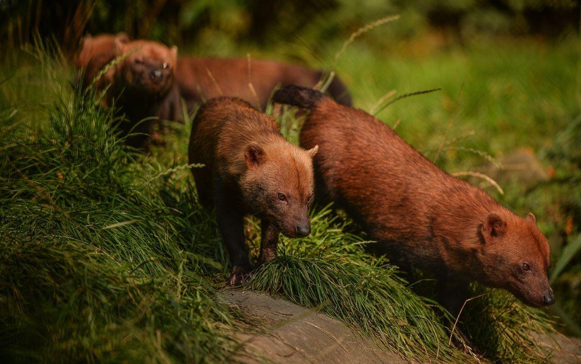 Unartiger kleiner Waldhund! - Bildquelle: Blast! Films