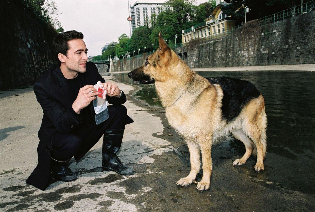 Rex bringt Marc (Alexander Pschill) ein verdächtiges Fundstück ... - Bildquelle: Ali Schafler Sat.1