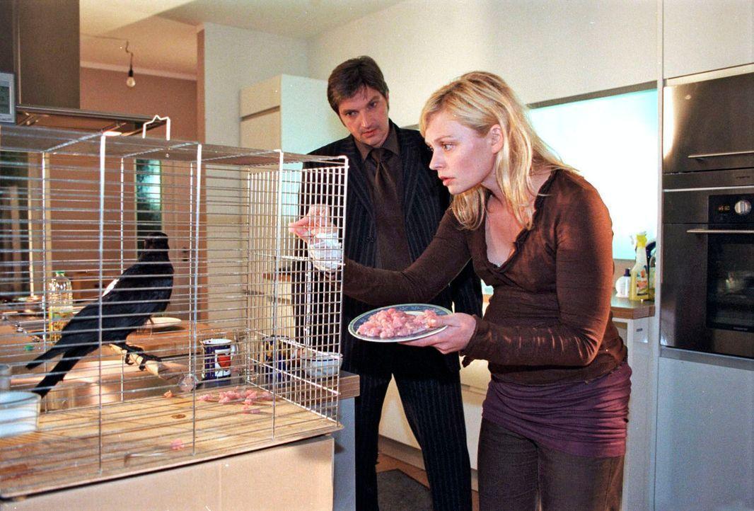 Marc (Stefan Jürgens, l.) hat kein Verständnis dafür, dass Alex (Susanna Simon, r.) eine Krähe mit nach Hause gebracht hat. - Bildquelle: Susan Skelton Sat.1