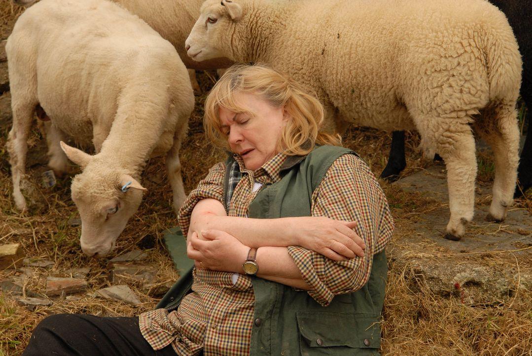 Unglücklicherweise verunglückt Mrs. Selkirk (Gwen Taylor) inmitten ihrer Schafherde. Um ihr zu helfen, muss sich Doc Martin überwinden, zu den Viech... - Bildquelle: BUFFALO PICTURES/ITV