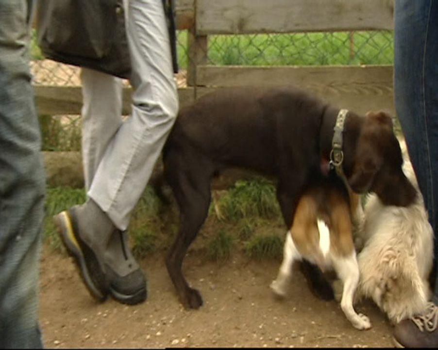 Stefanie ist Hundetherapeutin und hilft verzweifelten Hundebesitzern in ihrer häuslichen Umgebung. Ohne Gewalt und Sprache therapiert sie selbst die... - Bildquelle: SAT.1 Gold