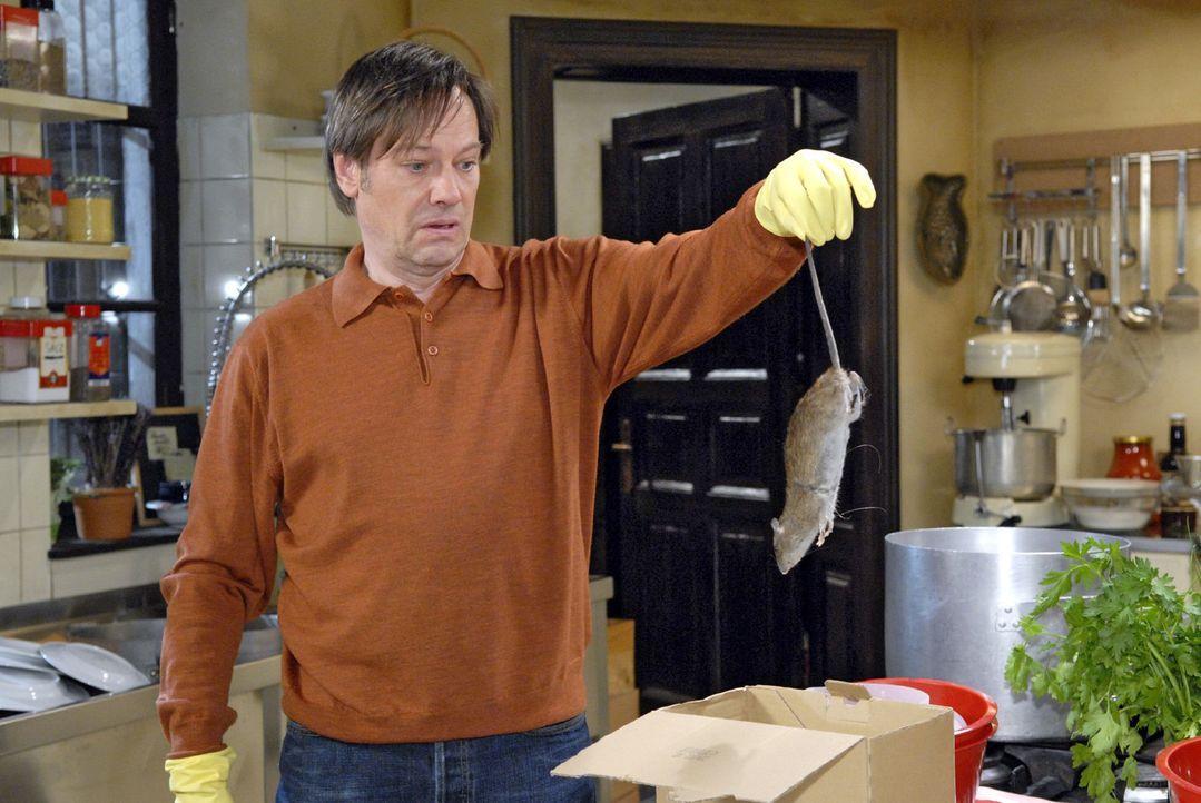 Armin (Rainer Will) hat im Restaurant Goldelse mit einer Ratte zu kämpfen ... - Bildquelle: Christoph Assmann Sat.1