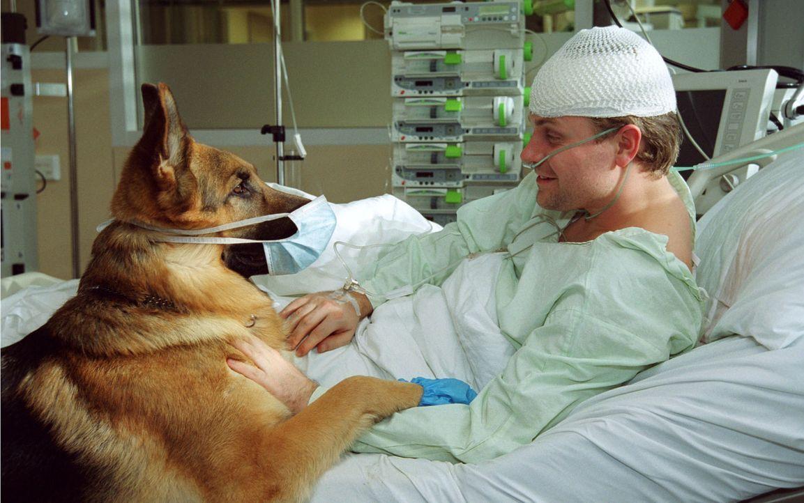 Rex und der Mann ohne Gedächtnis (Janek Rieke) auf der Intensivstation. - Bildquelle: Ali Schafler Sat.1