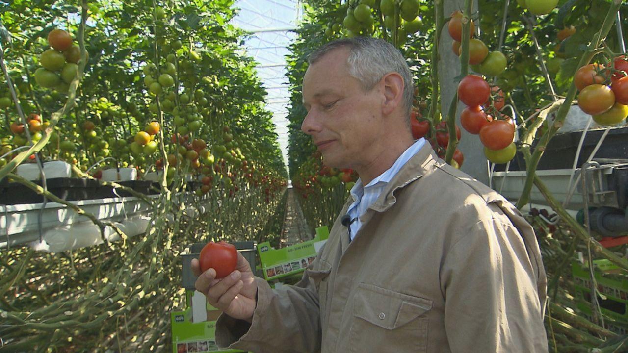 Da haben wir den Salat! - Was taugt unser Gemüse? Harry Schulz schafft Klarheit ... - Bildquelle: SAT.1