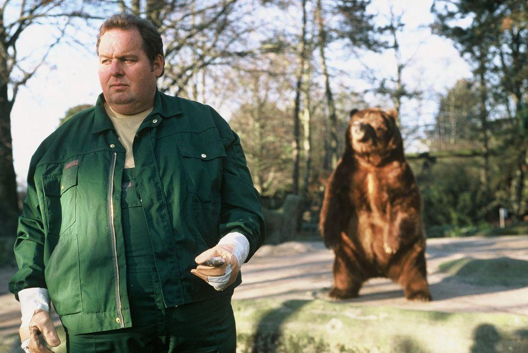 Ein Tierwärter wurde im Zoo von einem Löwen angefallen und getötet. Chefredakteur Stein möchte, dass Engel (Ottfried Fischer) diese Story übernimmt.... - Bildquelle: Krumwiede SAT.1 / Krumwiede